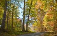 Las ayudas para constituir e iniciar la actividad de Sociedades de Fomento Forestal (Sofor) se podrán solicitar hasta el próximo 15 de marzo de 2016