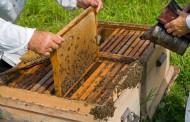 El Ministerio de Agricultura, Alimentación y Medio Ambiente publica la convocatoria de subvenciones para promover la investigación en el sector apícola