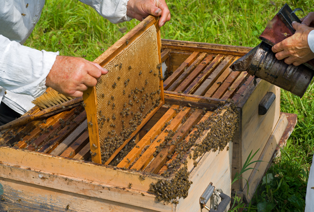 apicultura_tcm7-404730_noticia
